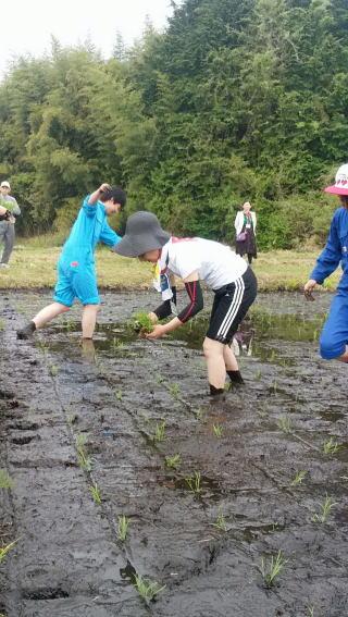 2016年田植え体験6