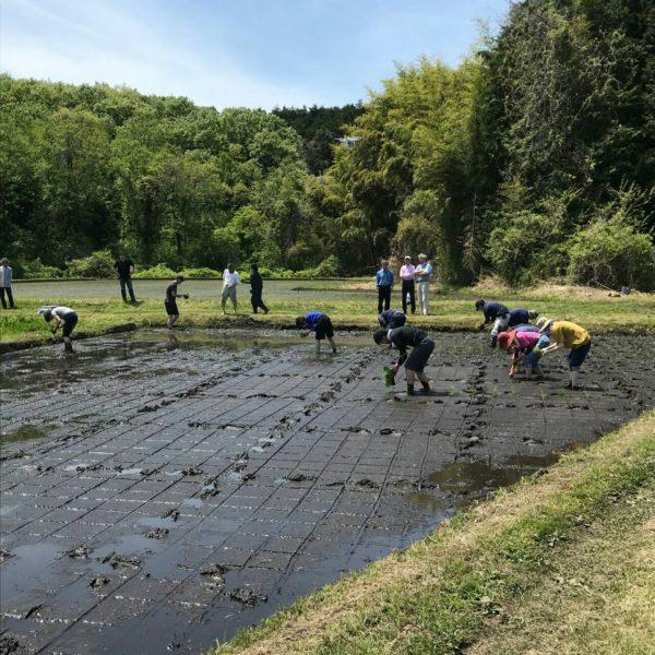 2019年 田植え祭2